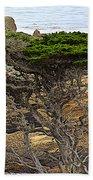 Cypress Tree In Point Lobos State Reserve Near Monterey-california  Beach Towel