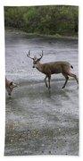 D-a0033 Mule Deer Beach Towel