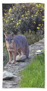 D-a0037 Gray Fox On Our Property Beach Towel
