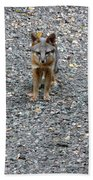 D-a0051-dc Gray Fox Pup Beach Towel