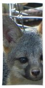 D-a0068 Gray Fox Pup Beach Towel