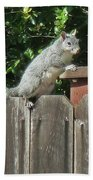 D-a0071-e-dc Gray Squirrel On Our Fence Beach Towel