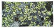 D07343-dc Lichen On Rock Beach Towel