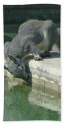 D2b6341-dc Gray Squirrel Drinking From The Pool Beach Towel
