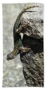 D7b6335 Western Fence Lizard, Male, Sonoma Mountain, Ca Beach Towel