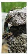 D7b6336 Blue Belly Lizard Beach Towel