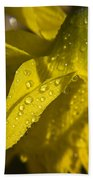 Daffodil Dew Beach Towel