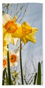 Daffodils Backlit Beach Towel