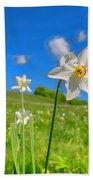 Daffodils Blossimg At Cavalla Plains 2017 II - Fioritura Dei Narcisi Al Pian Della Cavalla 2017 Beach Sheet