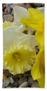 Daffodils Flower Artwork 29 Daffodil Flowers Agate Rock Garden Floral Art Prints Beach Towel