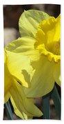Daffodils In Spring Beach Towel