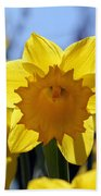 Daffodils In The Sunshine Beach Towel