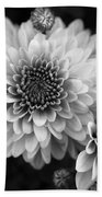 Dahlia Burst B/w Beach Towel