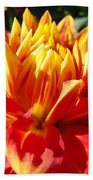 Dahlia Florals Orange Dahlia Flower Art Prints Canvas Beach Towel