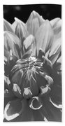 Dahlia In Black And White 2 Beach Towel