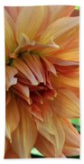 Dahlia In Bloom Beach Sheet