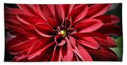 Dahlia Radiant In Red Beach Towel