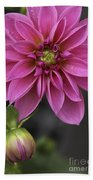 Dahlia With Dew In Pink Beach Towel