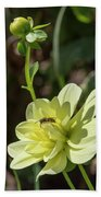 Dahlia With Wasp Beach Towel