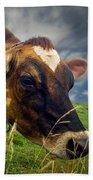 Dairy Cow Eating Grass Beach Towel