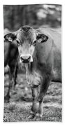 Dairy Cow On A Farm Stowe Vermont Black And White Beach Towel