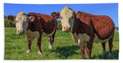 Cattle Andover New Hampshire Beach Towel