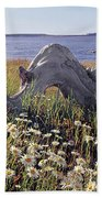 136236-daisies And Driftwood  Beach Towel