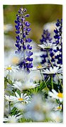 Daisies And Lupine Beach Sheet