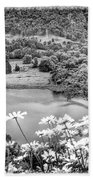 Daisies At Queens View In Greyscale Beach Towel