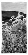 Daisies By The Roadside At Loch Linnhe B W Beach Towel