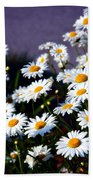 Daisies Beach Towel by Lana Trussell