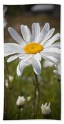 Daisy 1 Beach Towel