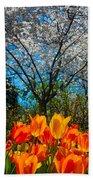 Dallas Arboretum Tulips And Cherries Beach Towel