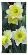 Dallas Daffodils 08 Beach Towel