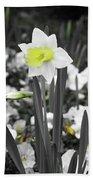 Dallas Daffodils 54 Beach Towel