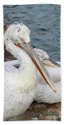 Dalmatian Pelican #3 Beach Towel