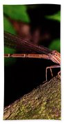 Damselfly 006 Beach Towel