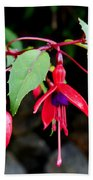 Dancing Fuchsia Beach Towel