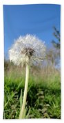 Dandelion Clock Beach Towel