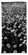 Dandelion Field In Black And White Beach Towel