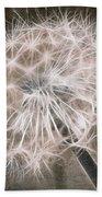 Dandelion In Brown Beach Towel by Aimelle