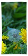 Dandelions, Young And Old Beach Towel