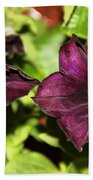 Dark Purple Petunia Beach Towel