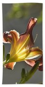 Dark Red Day Lily With Sun Shining Through I Beach Towel