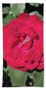 Dark Red Rose Beach Towel