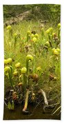 Darlingtonia Plants Grow Beside Beach Towel