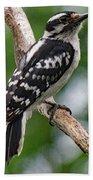 Daydreaming Downy Woodpecker Beach Towel