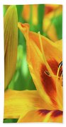 Daylily Bud And Bloom Beach Towel