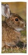 Ddp Djd Snowshoe Hare 98 Beach Towel