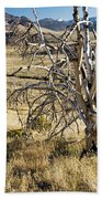 Dead Tree Panorama Beach Towel